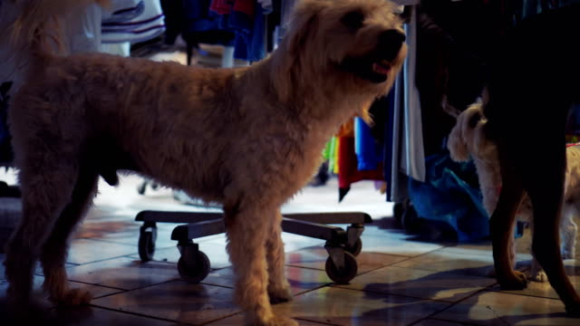 dogs want to play together - black hairy women stock videos & royalty-free footage