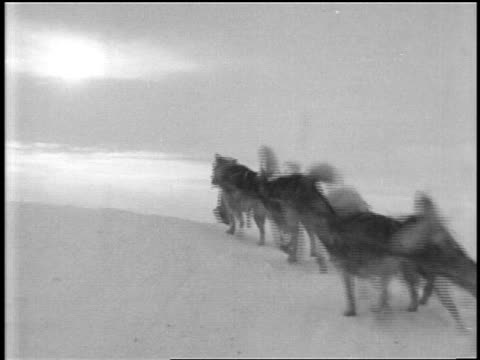 view dogsled man riding over ice in byrd's expedition to antarctica / documentary - one mature man only stock videos & royalty-free footage