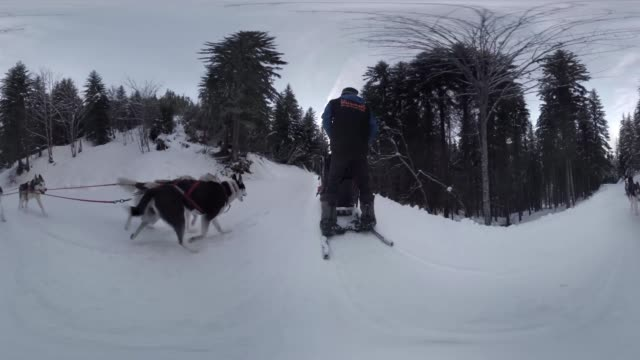 Dogsled Ride in French Alps