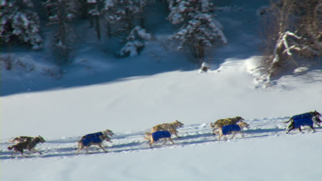 A dogsled team competes in the Yukon Quest.