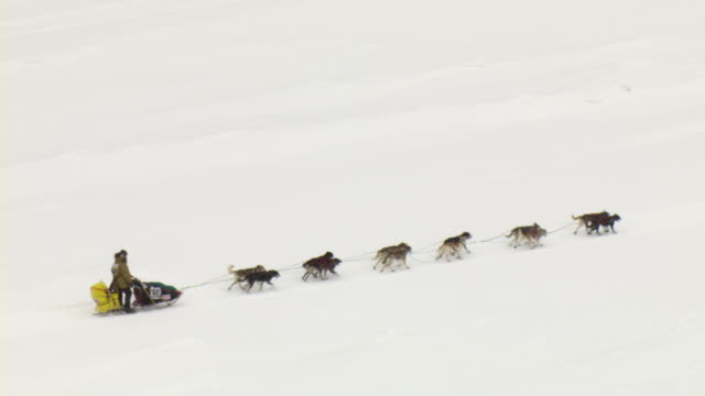 A dogsled team races over a frozen river.