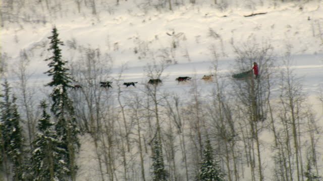 A dogsled team races through the woods.