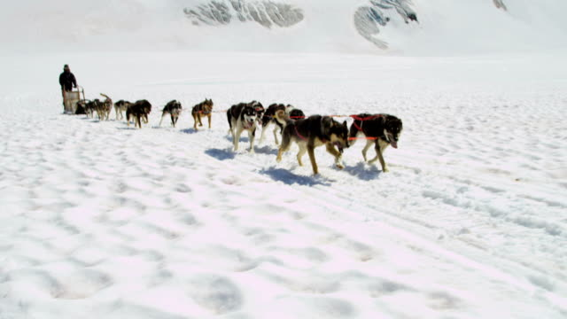 dogsledding team in motion high mountain pass alaska - malamute stock videos and b-roll footage