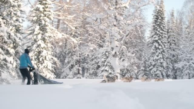 Dogsledding though snowy woodland