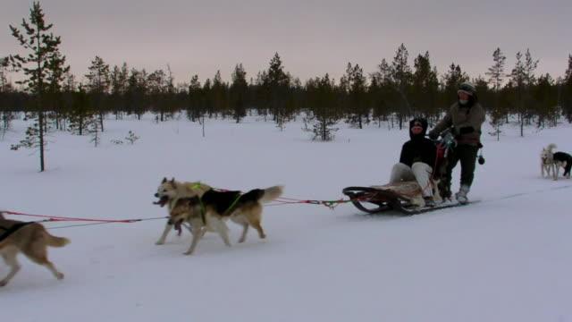 Dogsledding through Harriniva