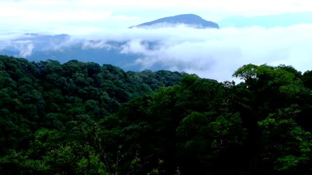 vídeos de stock, filmes e b-roll de doi inthanon parque nacional no amanhecer na província de chiang mai, tailândia - ângulo agudo