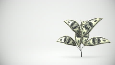 dollar tree growing - alpha matte, hd - making money stock videos & royalty-free footage