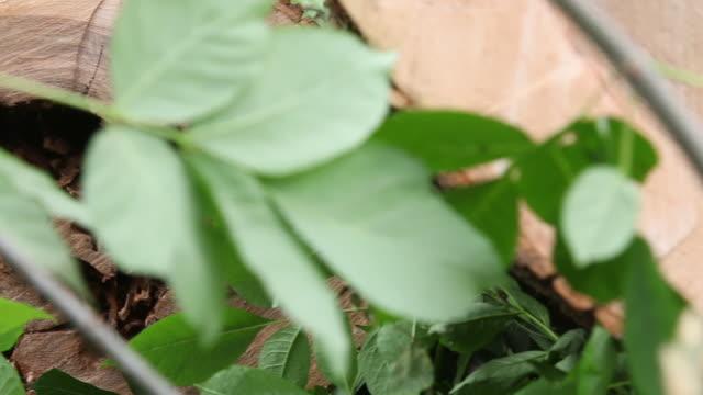 dolly across ash tree stump - ash tree stock videos & royalty-free footage