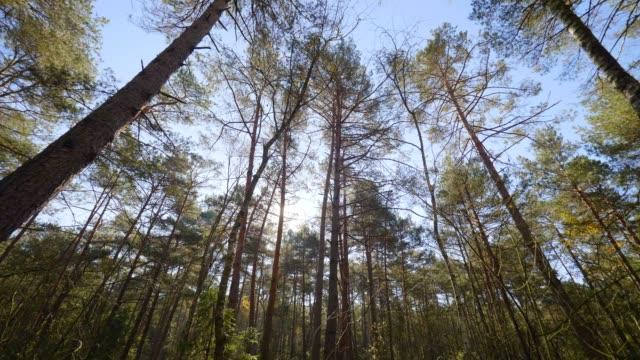 Dolly: Bavarois forêt en automne