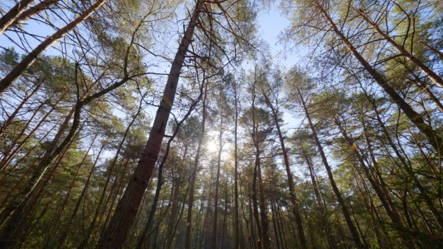 vídeos de stock, filmes e b-roll de dolly: a floresta bávara no outono - floresta da bavária