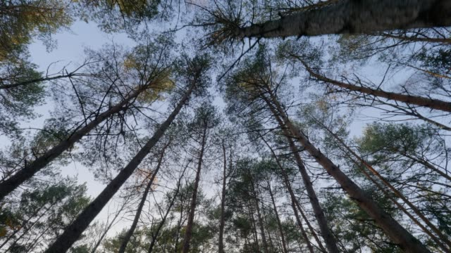 dolly: bavarian forest in autumn - pinaceae stock videos & royalty-free footage
