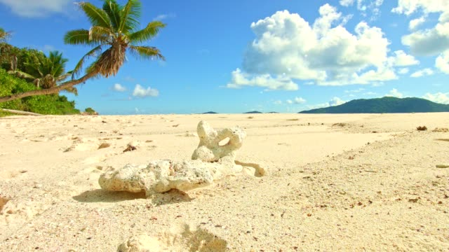 Dolly: Beautiful beach of Anse Fourmis