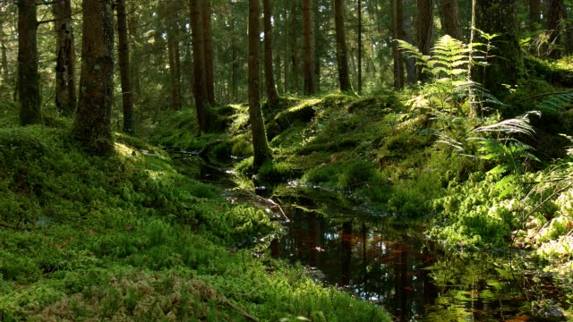 dolly: creek in green forest - moor stock videos & royalty-free footage