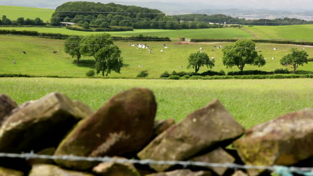hd dolly - drystone wall and english countryside - stone wall stock videos and b-roll footage