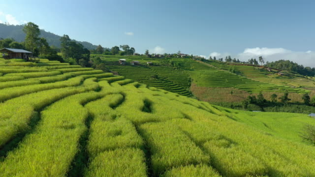 dolly forward of rice terrace with blue sky - luzon stock videos & royalty-free footage
