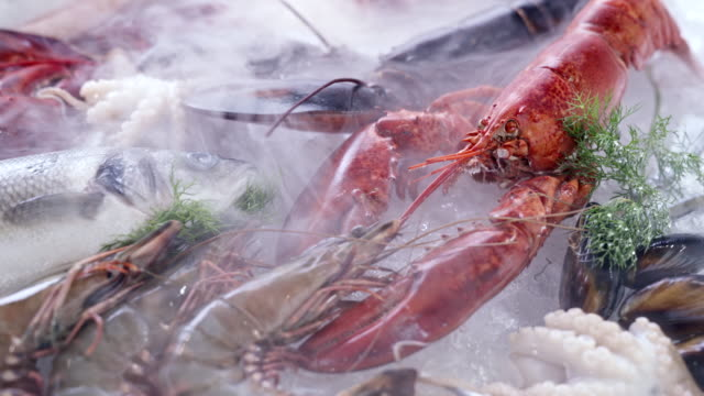 vídeos de stock e filmes b-roll de 4k uhd dolly forward: variety of luxury fresh seafood, lobster salmon mackerel crayfish prawn octopus mussel and scallop, on ice background with frozen icy smoke. fresh frozen seafood on ice and retail market concept. - peixe congelado