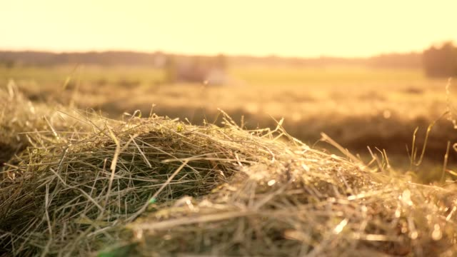 dolly: hay on field in summer - hay field stock videos & royalty-free footage