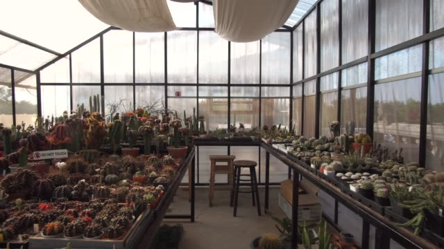 dolly in of collection of succulent plant - pendant light stock videos & royalty-free footage