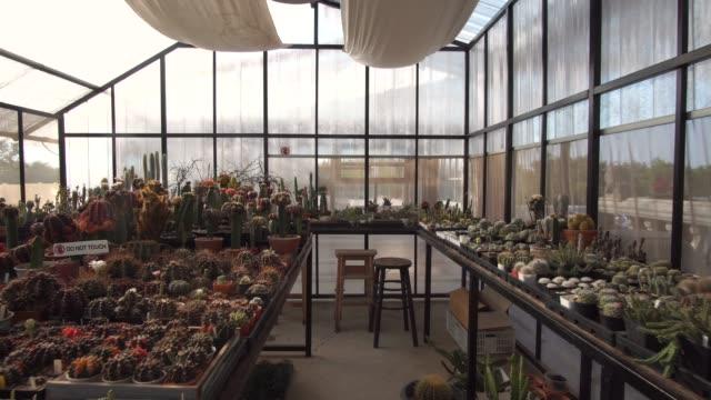 vidéos et rushes de dolly dans la collection de plante succulente - cactus pot
