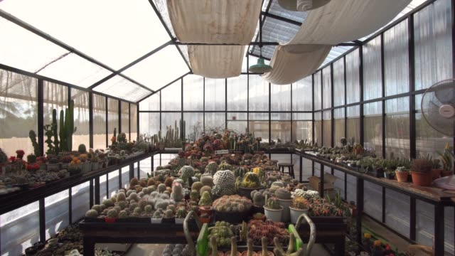 dolly in of collection of succulent plant - dolly shot stock videos & royalty-free footage