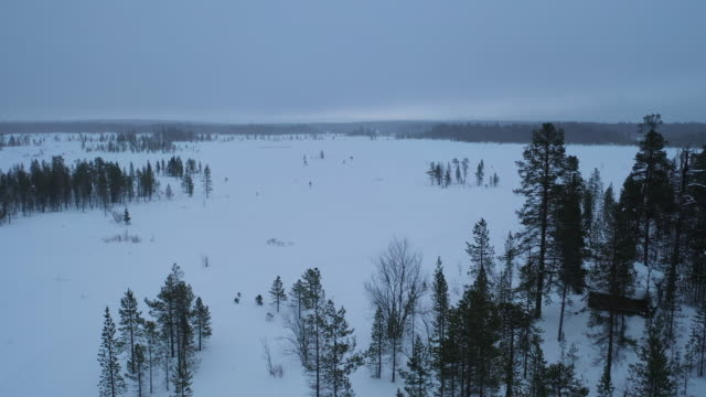 vídeos de stock, filmes e b-roll de dolly saiu da floresta do pinho na estação de inverno de nevando - pinhal