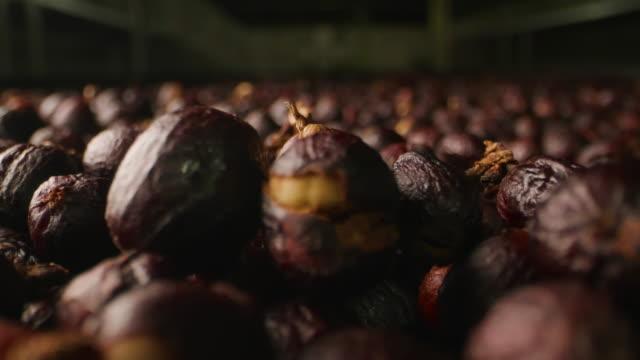 dolly macro shot  - dry coffee cherries. - coffee drink stock videos & royalty-free footage