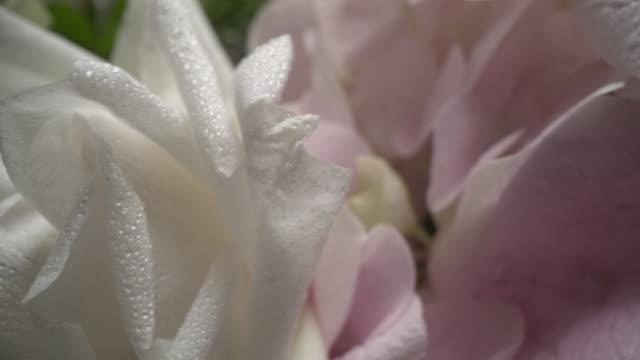 stockvideo's en b-roll-footage met dolly macro schot van mooie bloeiende bloemen close-up. - bloemenmotief