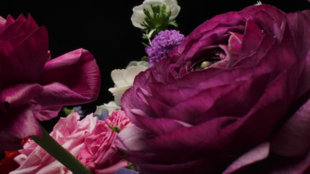 dolly macro shot of beautiful blooming ranunculus flowers bouquet close-up. - ranunculus stock videos & royalty-free footage