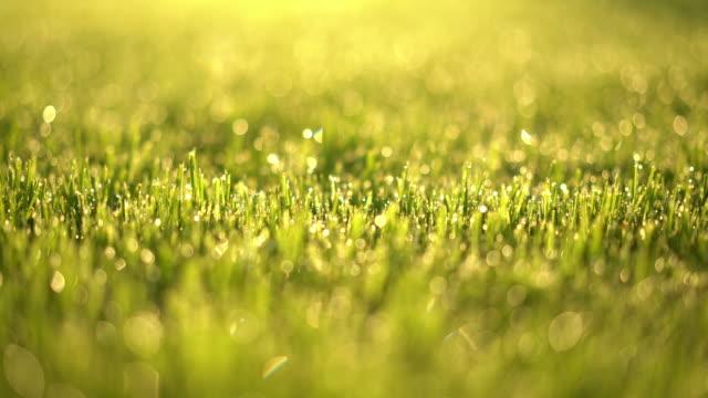 dolly move lawn in spring 4k closeup shallow dof - 濡れている点の映像素材/bロール