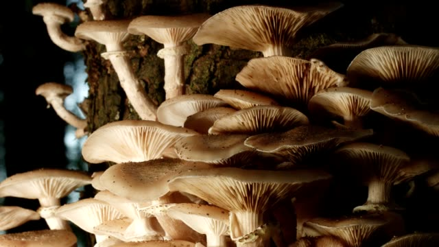 dolly: mushrooms in the forest - toxic substance stock videos & royalty-free footage