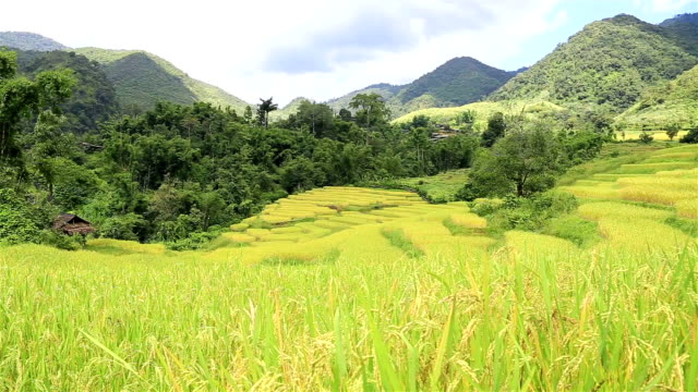 HD Dolly: Rice plantations in the mountains.