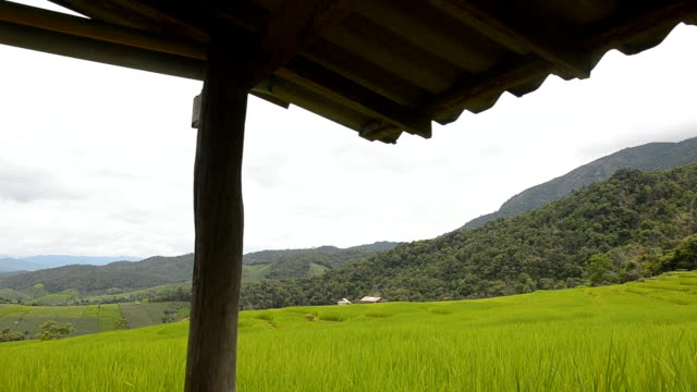 dolly: rice terraced field form an old eaves - eaves stock videos and b-roll footage