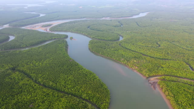 dolly right aerial of tropical rainforest and many river - river stock videos & royalty-free footage