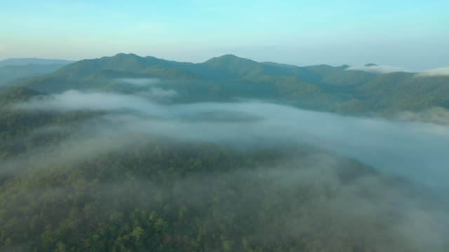 dolly right: aerial view of fog and rainforest mountain in the morning - area selvatica video stock e b–roll