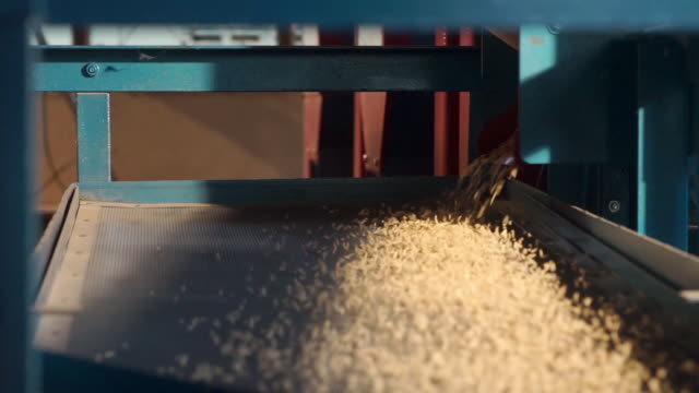 vídeos de stock, filmes e b-roll de câmera direita da dolly do uc do arroz cru do separador da bandeja, uma parte do processo de trituração do arroz para separar o arroz paddy do arroz marrom. - cereal plant