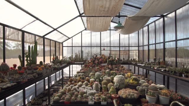 dolly right collection of potted cactus plants - pendant light stock videos & royalty-free footage