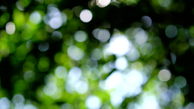Dolly shot 4K, green bokeh in rainforest.