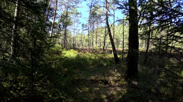 dolly shot: bavarian forest in spring - pinaceae stock videos & royalty-free footage