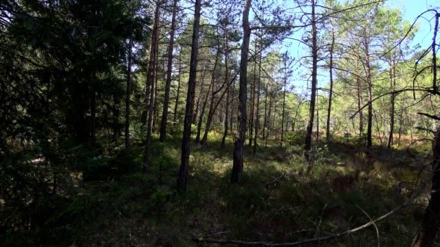 Dolly erschossen: Bayerischer Wald im Frühjahr