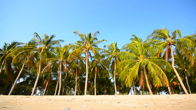 dolly shot: beach and row of palm tree - full hd format stock videos & royalty-free footage