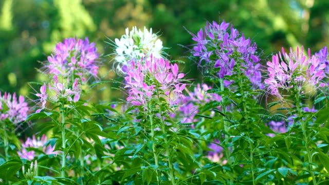 Dolly shot Beautiful Flowers Field