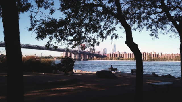 vidéos et rushes de dolly shot between silhouetted trees of new york's williamsburg bridge. - banc public