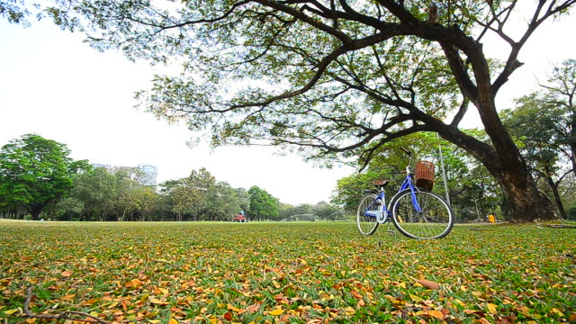 dolly shot: bicycle on green yard at public park - full hd format stock videos and b-roll footage