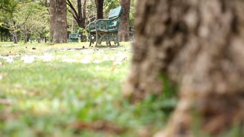 vídeos y material grabado en eventos de stock de dolly shot : banco de vacío en green park en la mañana - plano de plataforma rodante