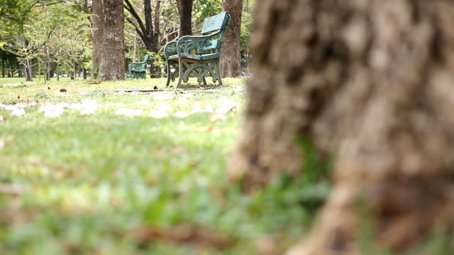 dolly shot: empty bench in green park at morning - dolly shot stock videos & royalty-free footage