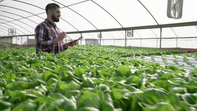 vídeos de stock, filmes e b-roll de dolly shot, farmer checkin his plants in a greenhouse - vanguardista