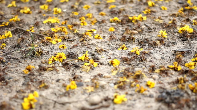 dolly shot: flowers on the ground. - bugtiger stock videos and b-roll footage