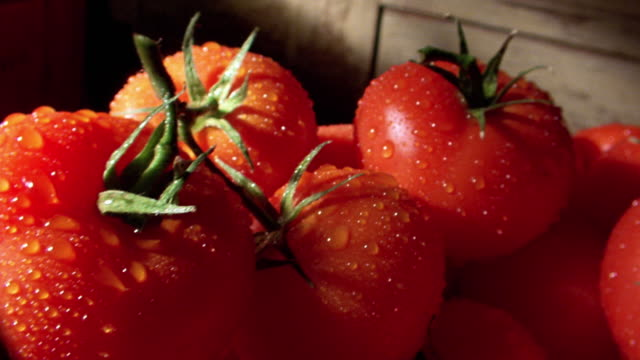 dolly shot from close up of wet tomatos in metal basket
