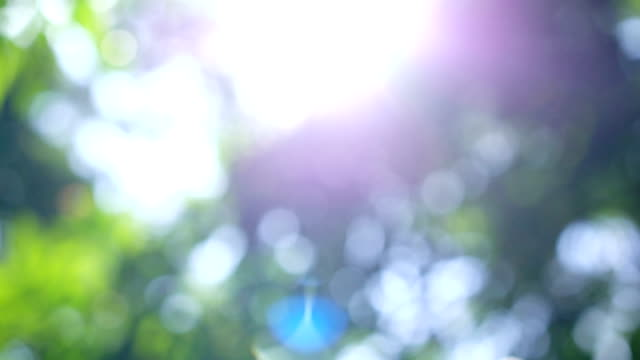 4K Dolly Shot, grüne Blätter Bokeh mit Lens Flare im Regenwald.