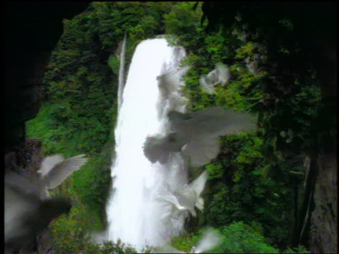 dolly shot in thru arch towards waterfall in forest / white doves flying in foreground - colomba video stock e b–roll
